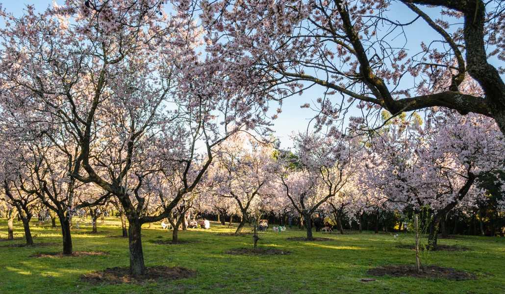5-parques-para-hacer-picnics-en-madrid